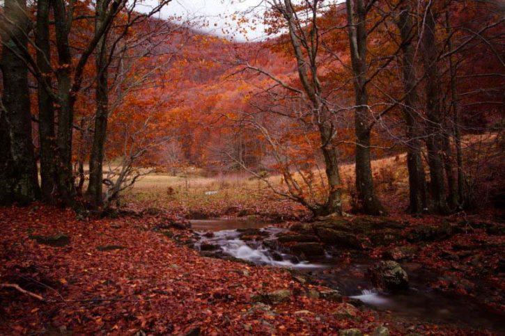 Рыжий лес в Украине