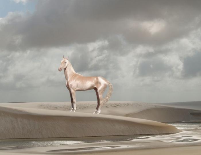 Ахалтекинская лошадь (ахалтекинец)