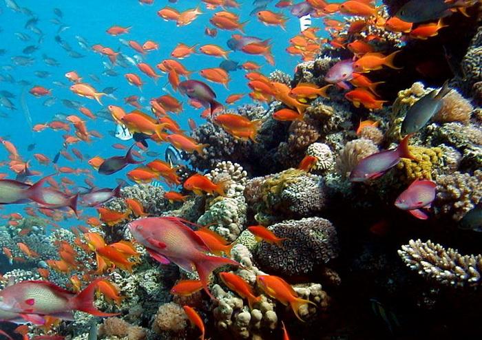 Красное море Эйлат