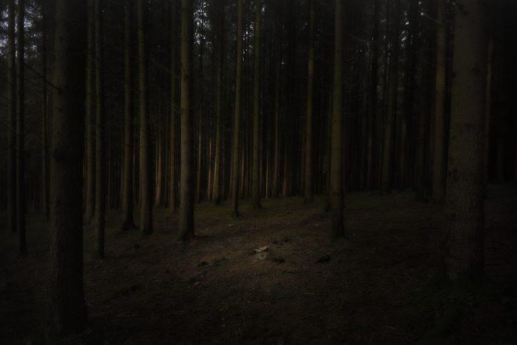 Темный лес в штате Коннектикут