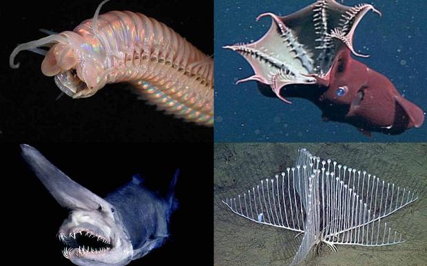 Самые необычные рыбы океана