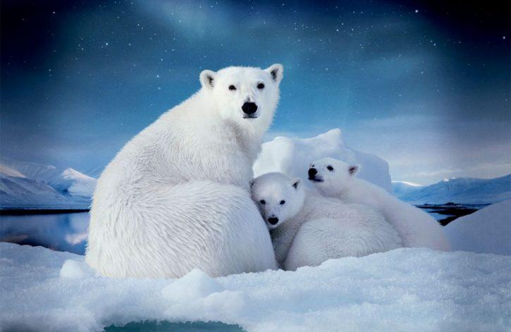 Самые красивые места Арктики