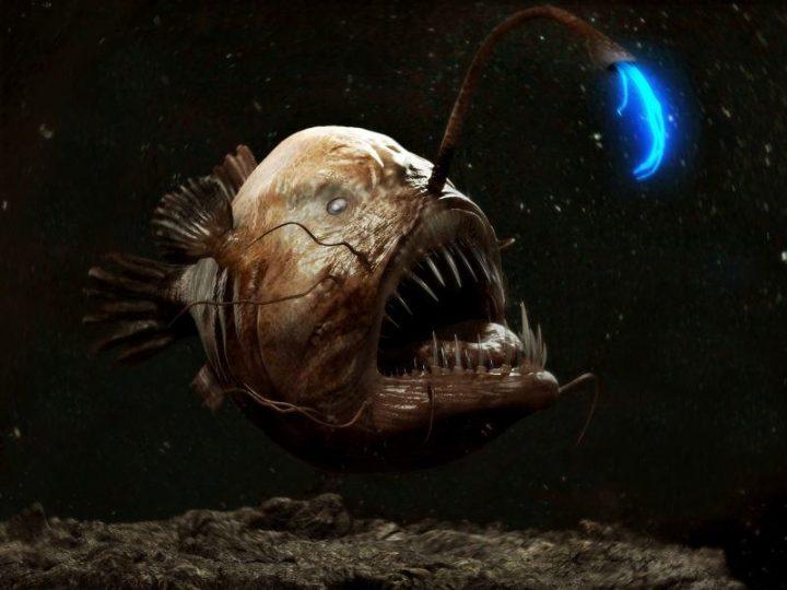 Рыба-чёрт