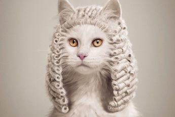 Если бы животные были судьями