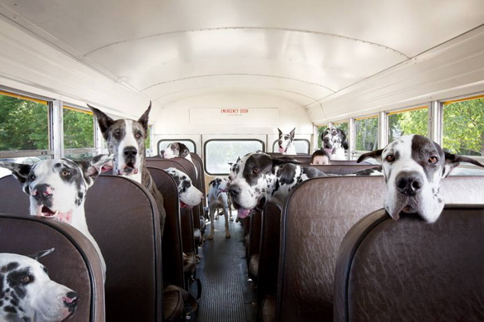 «Автобус полный датчан»
