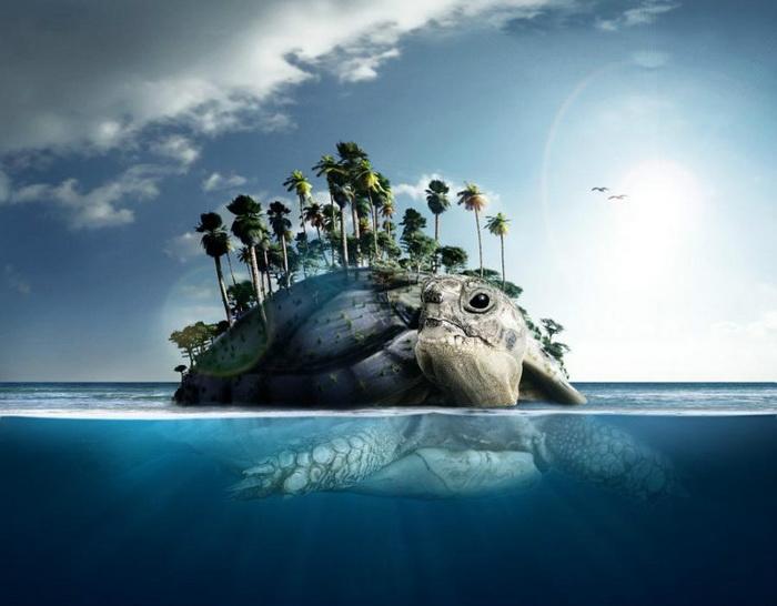 «Черепаший остров»