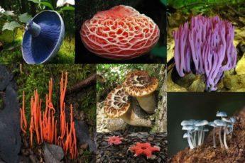 Фантастические грибы причудливых форм и раскрасок