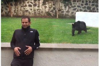 Пантера подкрадывается сзади к мужчине и в итоге… целует!