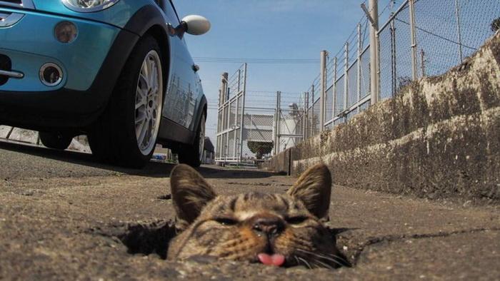 Как бездомные коты развлекаются в Японии