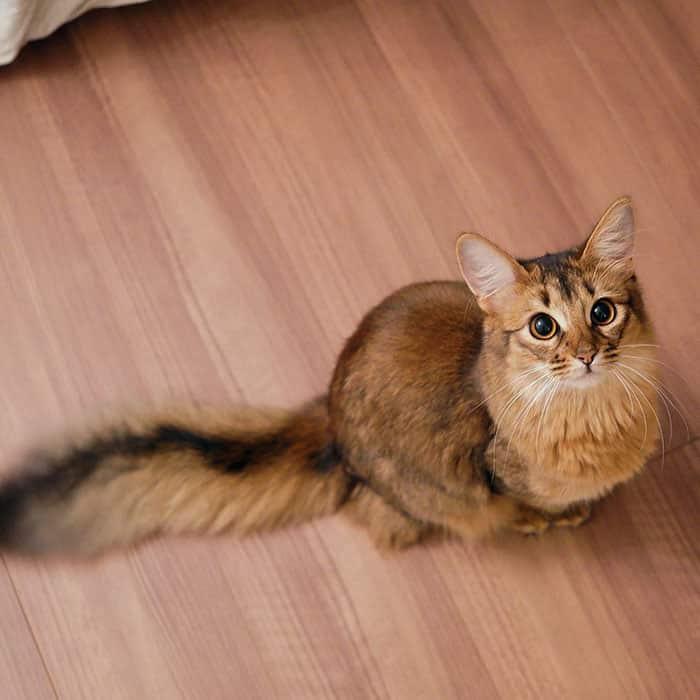 Кошка Люсина