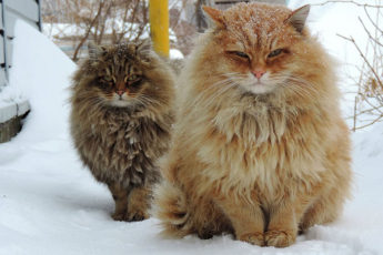 Красавицы из Сибири