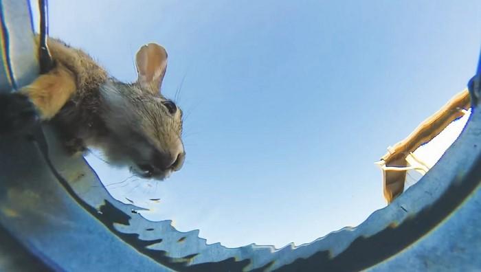 Блогер оставил в пустыне ведро с водой, а на дне установил камеру. Результат его усилий стал хитом!