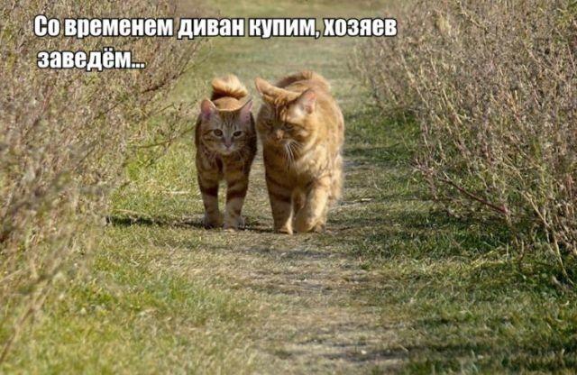 """""""Золотые горы"""" по-кошачьи"""