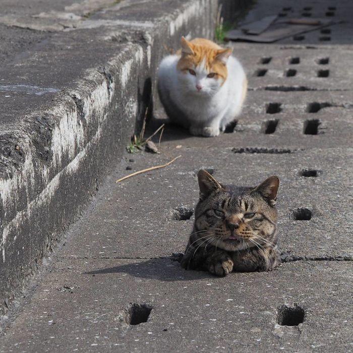 Японский фотограф Нян Кичи увлекается съемкой бродячих котов