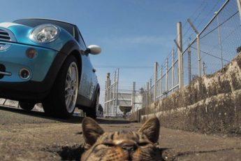 Так выглядит лучшая игровая площадка для бездомных котов