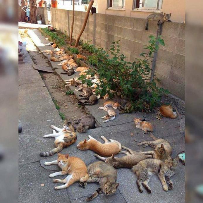 15 самых забавных моментов из жизни котов