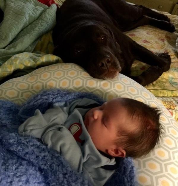 Только верная псина послужит незаменимой и самой заботливой няней твоему малышу, пока ты на работе!