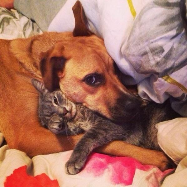 Пёс может подружиться даже с кошкой, если тебе это нужно!