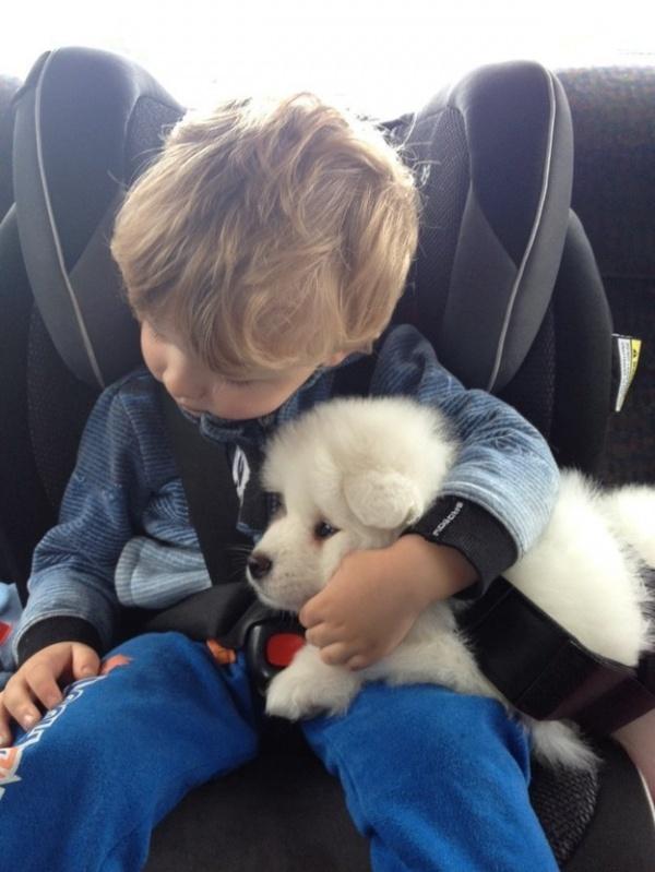 Пёс соберется с тобой в любую дорогу, даже в самую длительную!