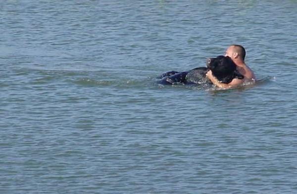 Никто не решился спасти тонущего медведя, кроме него…