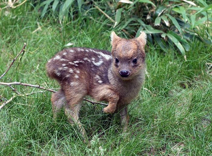 Десятка самых симпатичных детенышей редчайших живых существ на планете
