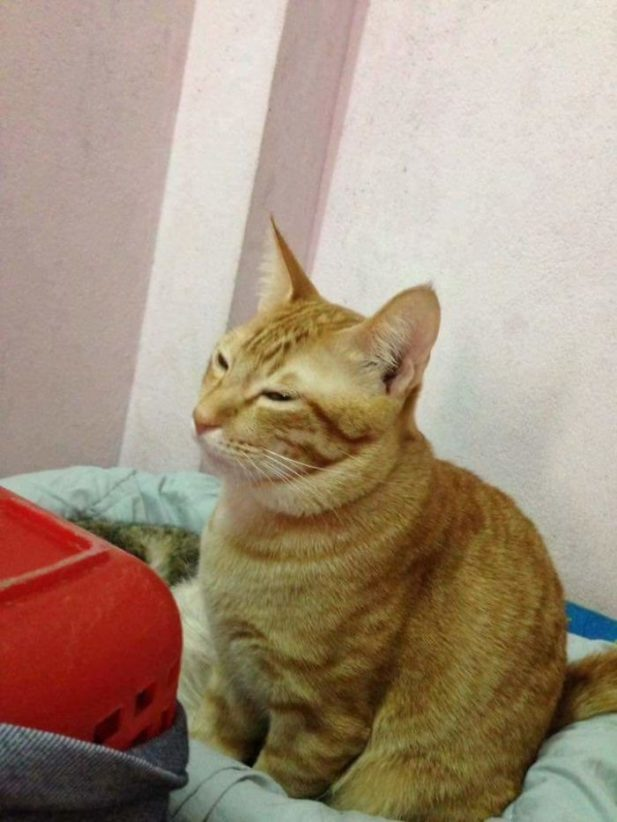 Когда у кошки только начались роды, кот был напряжен.