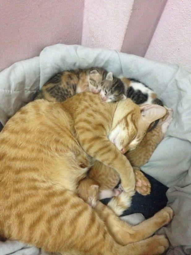 Кошачья семья, в которой царит мир и гармония.