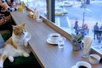 Настроение кота – в стиле блюз