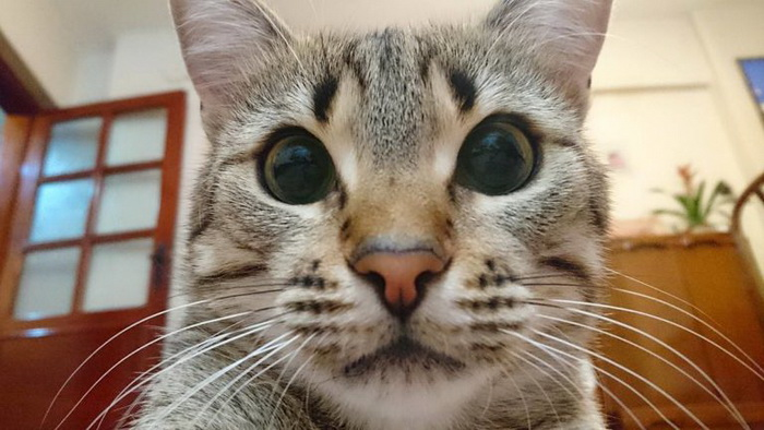 Ох уж эти кошачьи глаза
