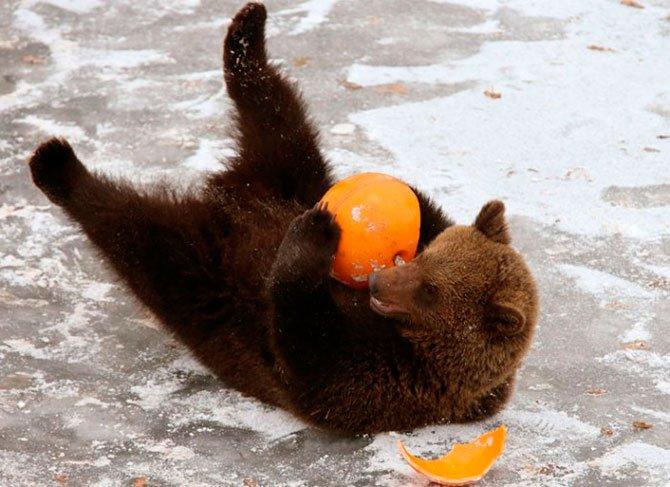 Медвежонок нападает на мужчину