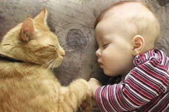 каждому ребёнку нужен кот