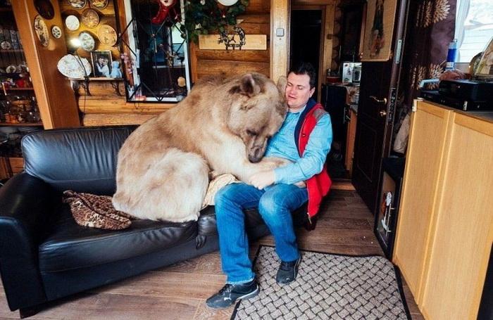 Семья приютила 3-х месячного медведя, они вместе уже 20 лет