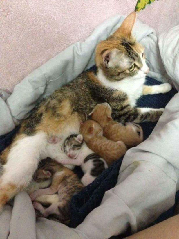 Кошке было тяжело, но она родила четырёх котят, все здоровые.