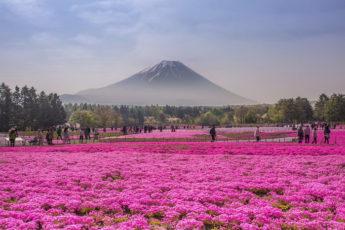 Очень красивые природные пейзажи обычных полей