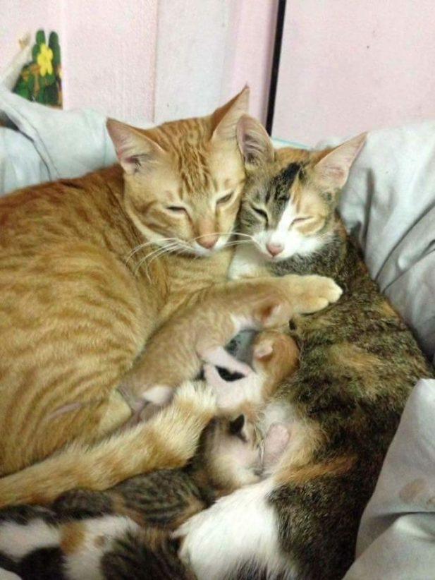Кот во время родов не отходил от кошки