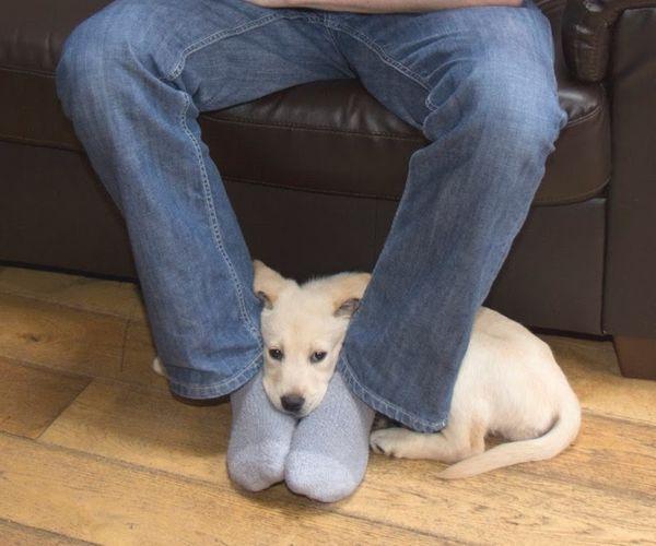 Когда собака сидит в ногах …