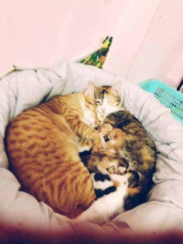Кошка может оставить котят отцу, если ей надо уйти