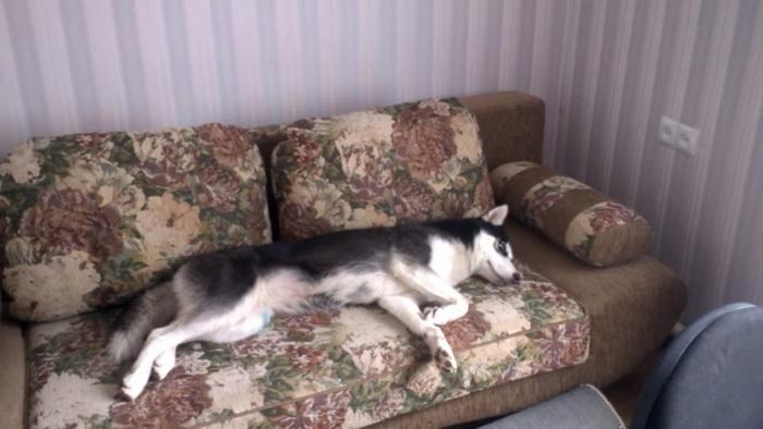 Хозяйка пытается разбудить свою ленивую собаку на прогулку