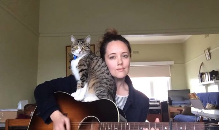 Кот — меломан