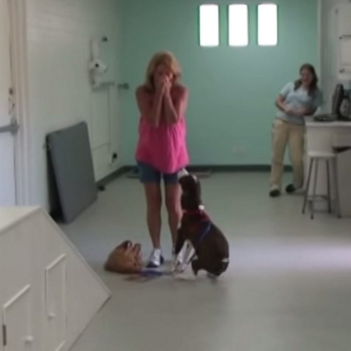 Парализованный пес снова начал ходить