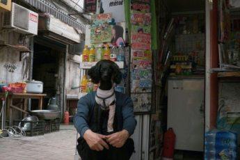 Гибрид — человеко-собак