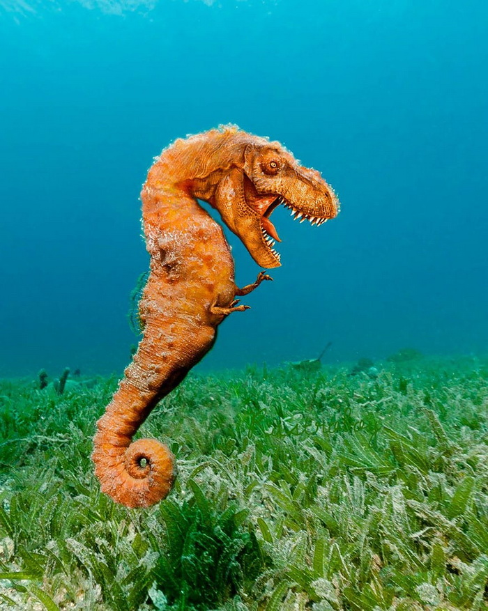 Морской дракон