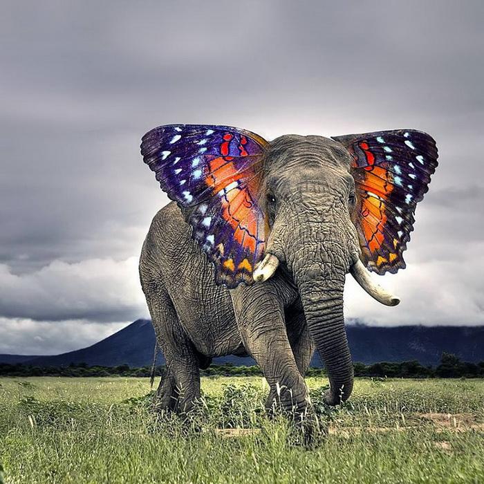 Бабочковый слон