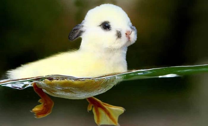 Кроличья утка