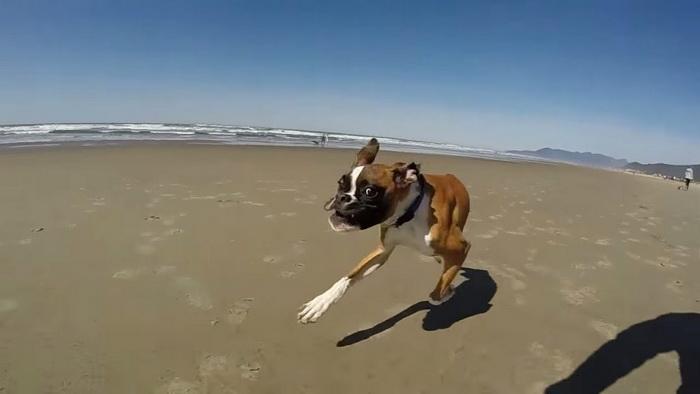 двуногая собака