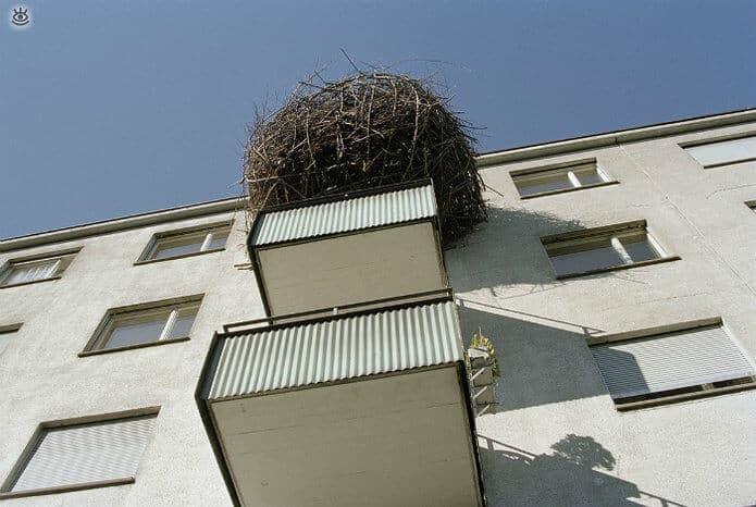 Кто-то решил свить гнездо