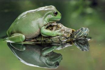 Фантастические портреты лягушек