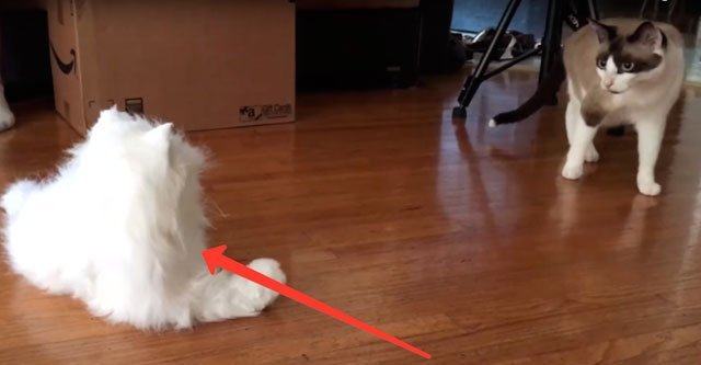 Как кошки реагирует на робокошку