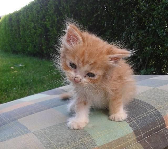 Крошечный рыжий котенок был найден в лесу в полном одиночестве