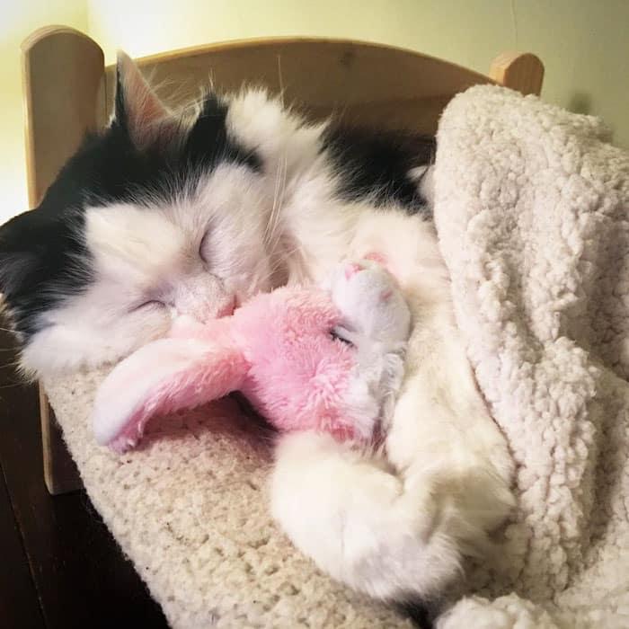 Эта кошка живет сейчас в окружении постоянной заботы